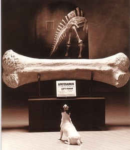 Big Dinosaur Bone